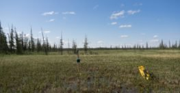 Fact sheet: Monitoring Rare Animals in Alberta's Boreal Forest